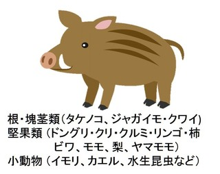 猪01.jpg
